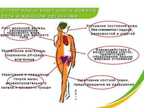 Роль эстрогенов у женщин