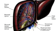 Гепатомегалия и диффузные изменения печени и поджелудочной железы
