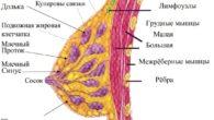 Лечение мастопатии молочной железы