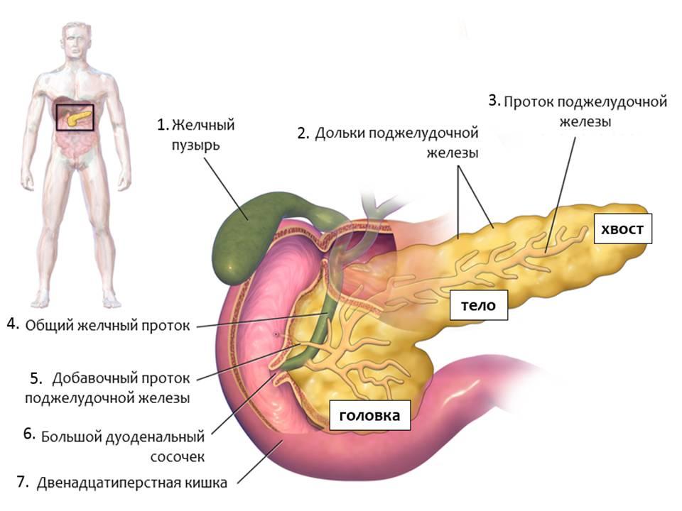 Чем быстро лечить поджелудочную железу в домашних условиях 339