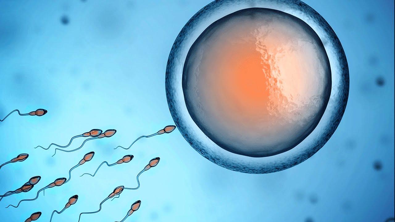 Причина неактивности сперматозоидов