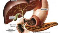 Травы для лечения поджелудочной железы