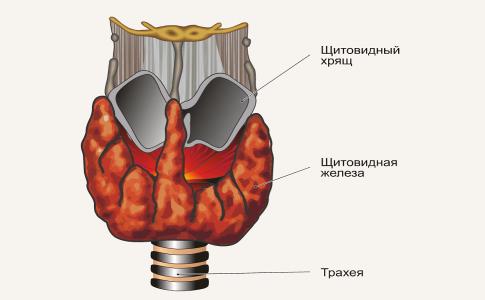Узлы в щитовидной железе и беременность