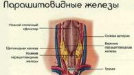 Повышенный кортизол в крови