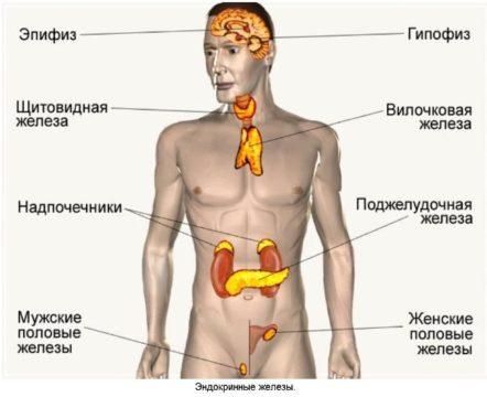 У какого врача можно проверить гормоны
