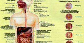 Холецистопанкреатит: острый и хронический