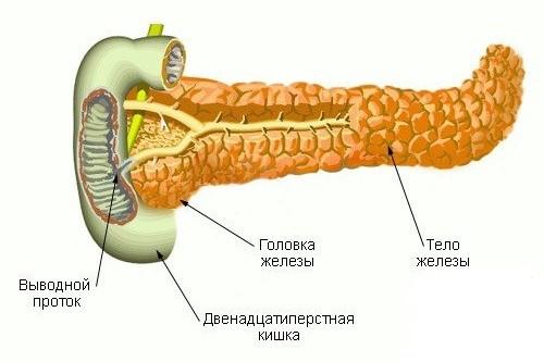 Можно кушать чеснок при поджелудочной железе