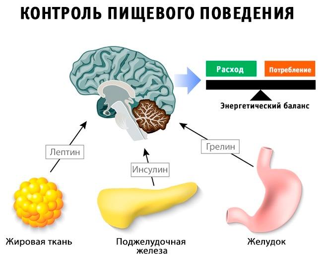 Грелин, Лептин и Инсулин